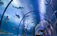 جذابیتهای آکواریوم تروکادرو پاریس | Aquarium de Paris