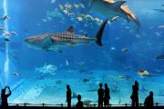 آکواریوم تروکادرو پاریس | Aquarium de Paris
