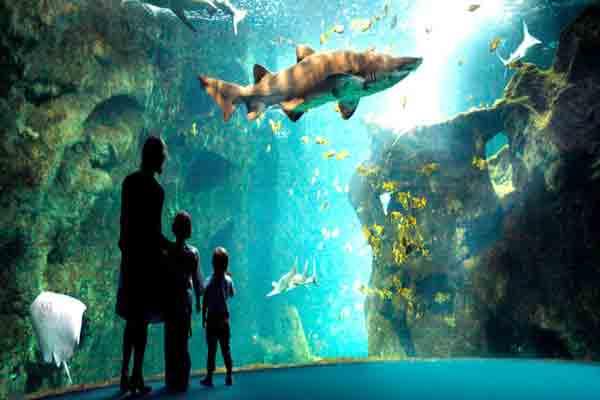 پاریس,آکواریوم پاریس , پری دریائی , Aquarium de Paris, Cinéaqua ,آکواریوم تروکادرو