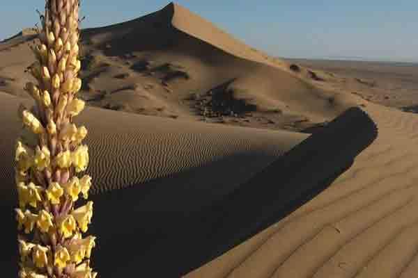 کویر ورزنه در اصفهان | کویر ورزنه  ملکه  کویرهای ایران | جاذبه های طبیعی ایران
